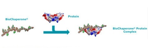 Formation of a BioChaperone® Protein Complex vf
